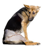 Spay, Neuter, and General Surgery